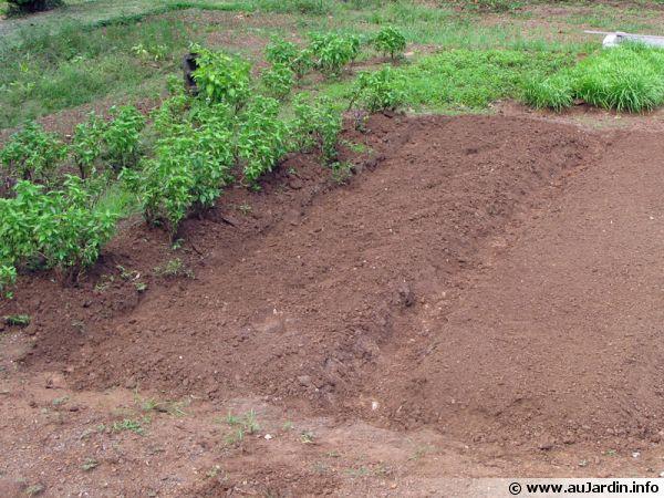 Amender le sol du potager - Que planter en mars au potager ...