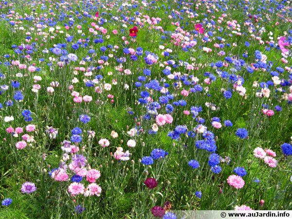 Une prairie fleurie favorise la biodiversité