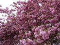 10 arbres mellifères