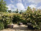 Jardin du Quay Branly, la pergola