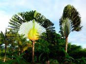 Familles botaniques