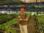 Reportage dans une pépinière spécialisée dans les orchidées tropicales