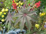 10 arbustes originaux