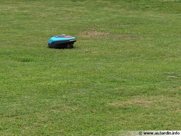 Un robot tondeuse à l'oeuvre au milieu de la pelouse