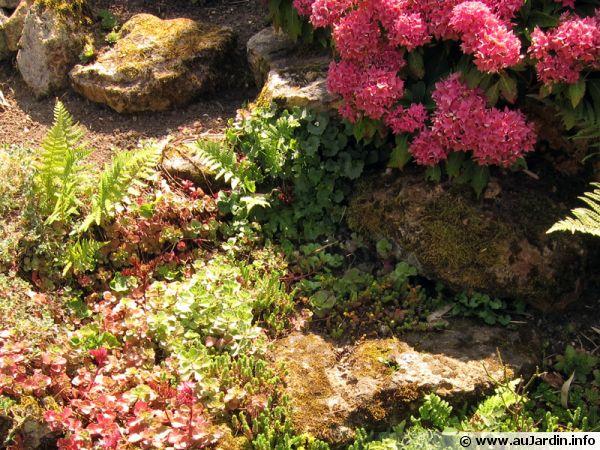 La rocaille, une évocation sauvage