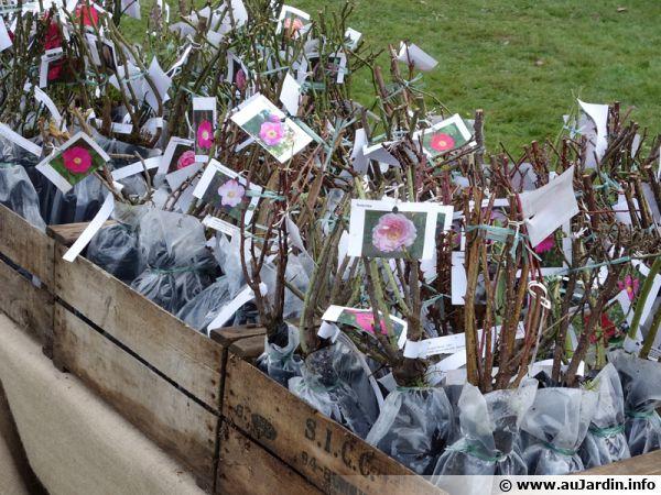 Vente de rosiers à racines nues lors d'un salon des plantes