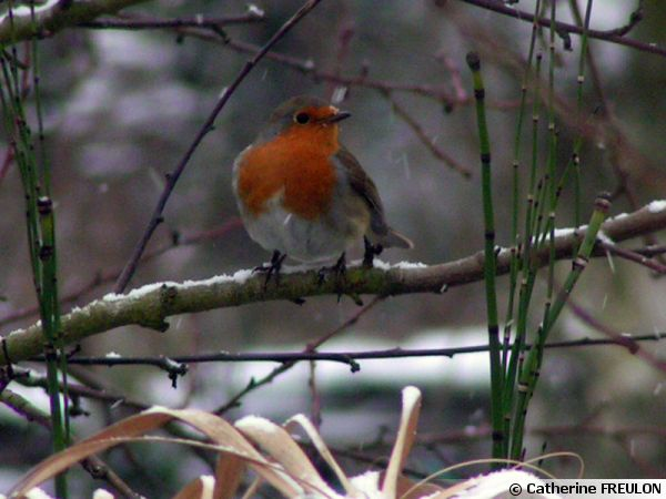 Les oiseaux du jardin for Oiseaux du jardin