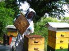 Les éléments de la ruche