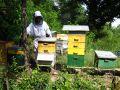 Juin à la ruche
