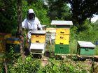 Octobre à la ruche