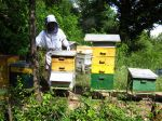 Août à la ruche