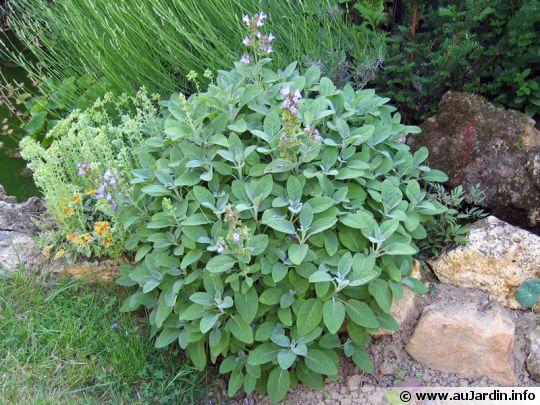 Les meilleures plantes pour les tisanes