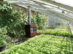10 astuces pour optimiser l'espace dans une serre de jardin