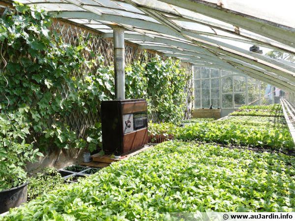 10 astuces pour optimiser l\'espace dans une serre de jardin