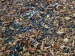 Le rôle de la matière organique dans le sol