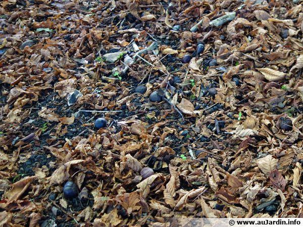 Les feuilles mortes apportent de la matière organique au sol