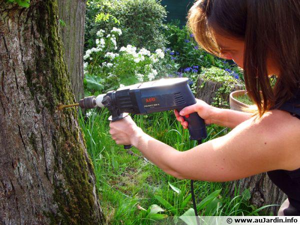 La dévitalisation d'une souche d'arbre