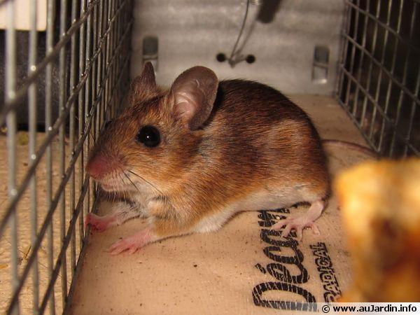 Capturer une souris