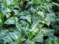Des légumes même en hiver