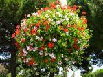Des fleurs pour les suspensions