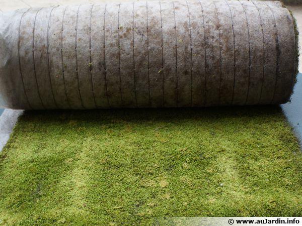 Des tapis de mousse végétale vivante