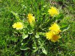 Quand les fleurs et les herbes s'invitent dans nos assiettes