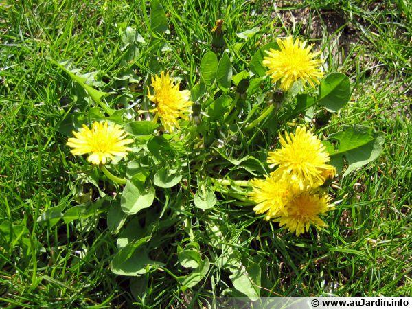 Assez Vos trucs contre les mauvaises herbes NH21