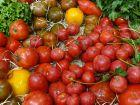 La culture de la tomate selon Pascal Poot