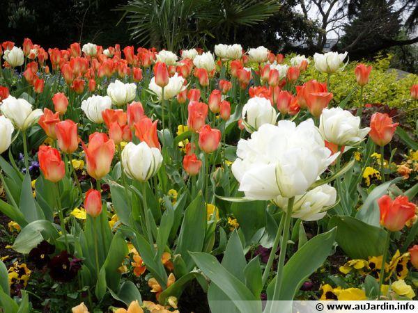 Des tulipes pour réussir le printemps au jardin