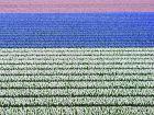La Hollande, le pays des fleurs