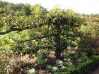 Août au jardin fruitier