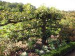 Octobre au jardin fruitier