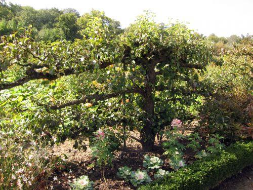 Novembre au jardin fruitier for Au jardin info