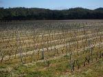 Vers des vignobles plus respectueux de l'environnement