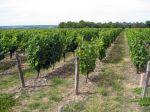 Thierry Delaunay, viticulteur en Touraine