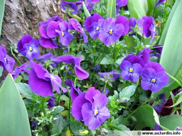 Les plantes hybrides