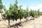 Viticulture et bio