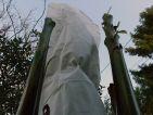 Mise en place d'un voile d'hivernage pour protéger des banaiers