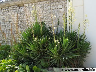 Guide achat taille haie et conseils jardinage for Conseil jardinage
