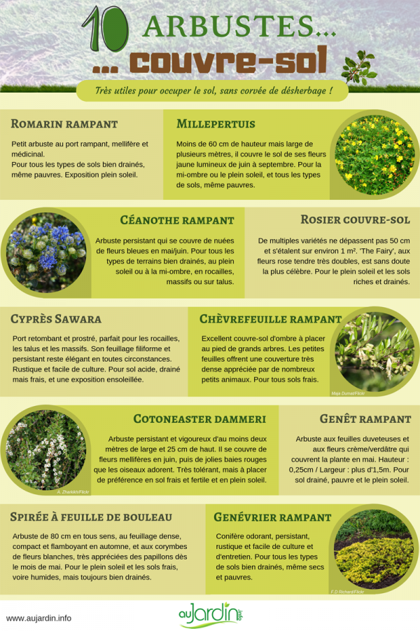 10 arbustes couvre-sol