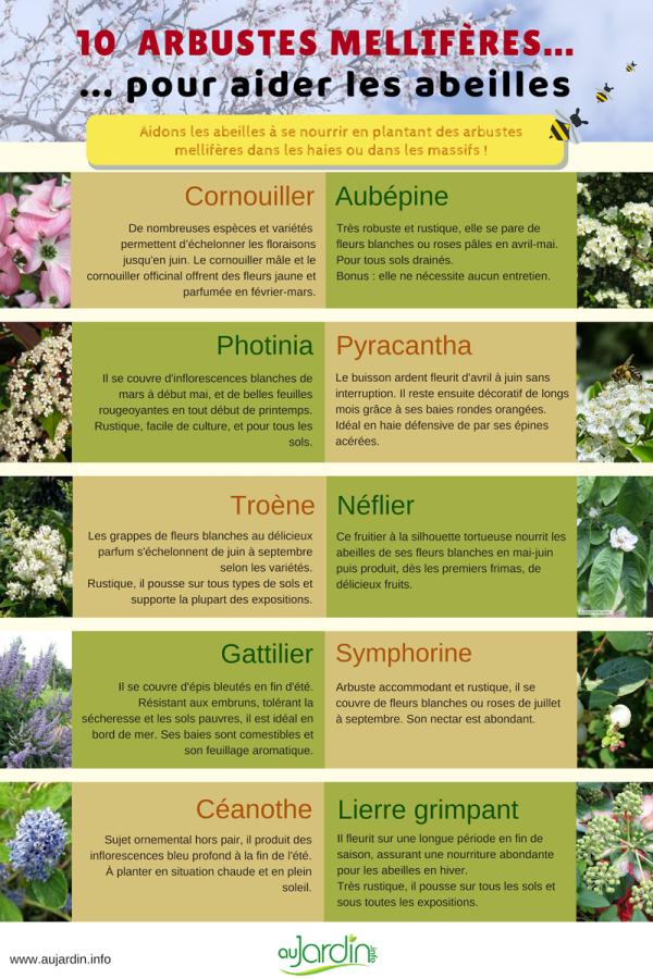 10 arbustes mellifères pour aider les abeilles