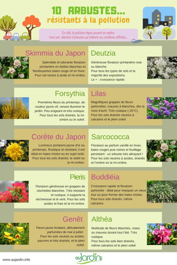 10 arbustes résistants à la pollution