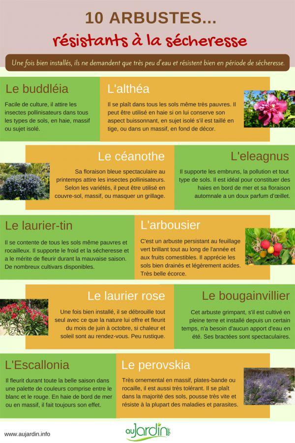 10 arbustes résistants à la sécheresse