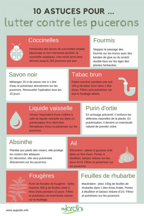 10 astuces naturelles pour lutter contre les pucerons