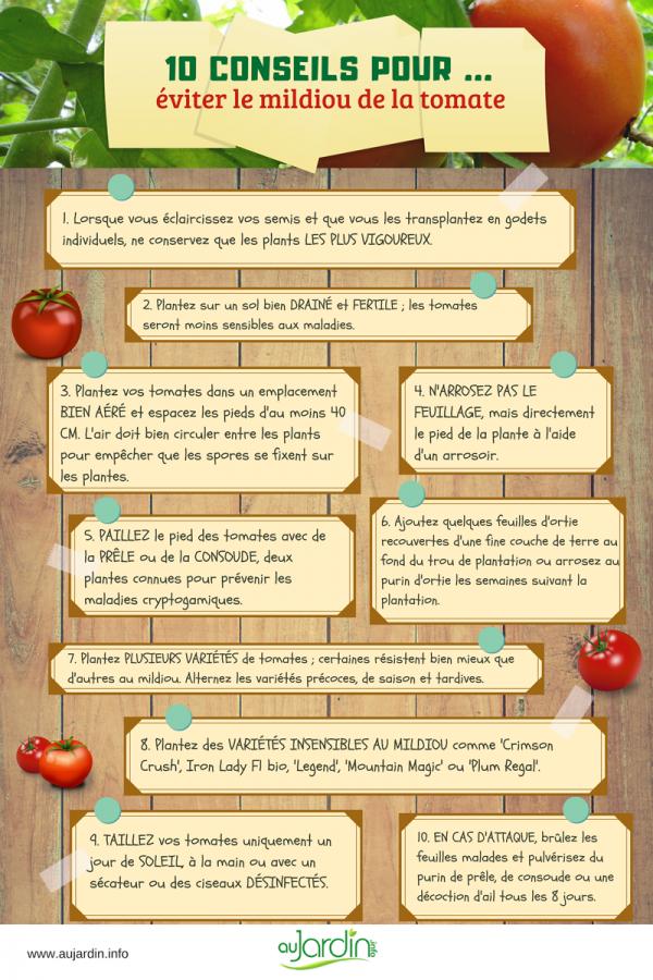 10 conseils pour éviter le mildiou de la tomate
