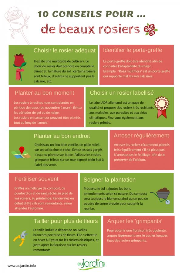 10 conseils pour de beaux rosiers
