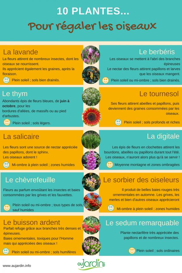 10 plantes pour régaler les oiseaux
