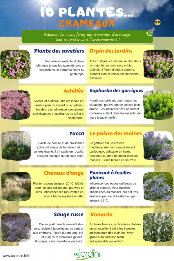 10 plantes chameaux