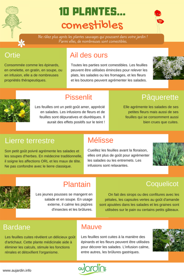 10 plantes sauvages comestibles