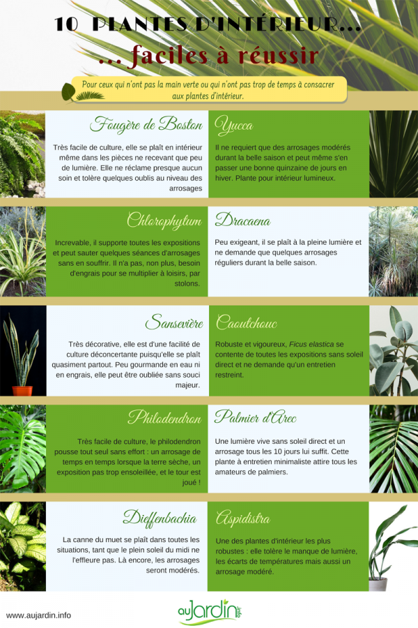 10 plantes d'intérieur faciles à réussir